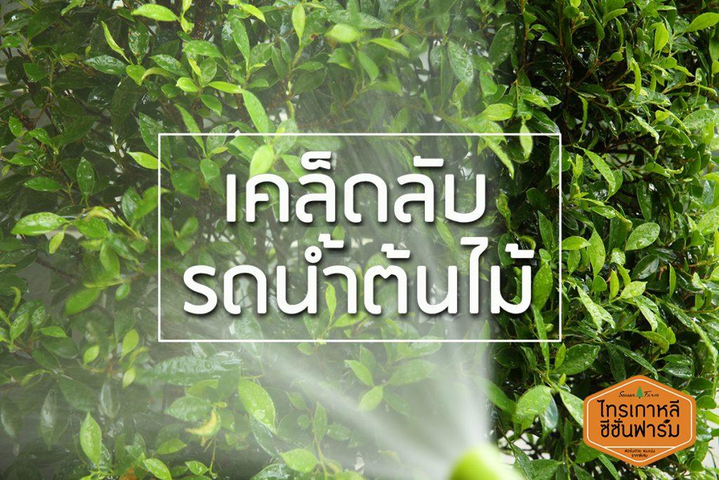 เคล็ดลับ รดน้ำต้นไม้